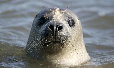 harbor seal, long island, atlantic ocean, animal rescue